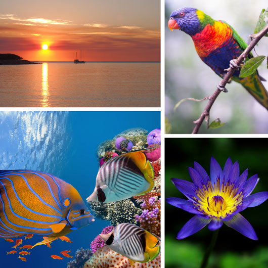 Why 'Signature Colours' matter
